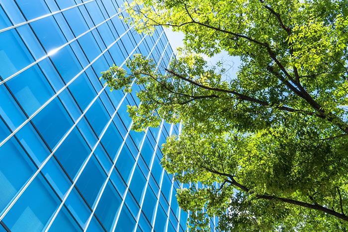 樹木と高層ビル